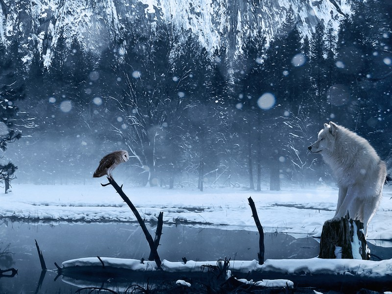 Wolf Stares Down Owl Wallpaper