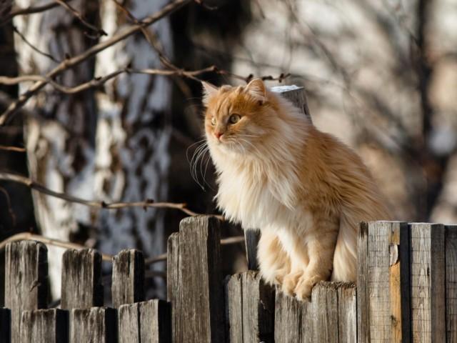 Cat Perched Wallpaper