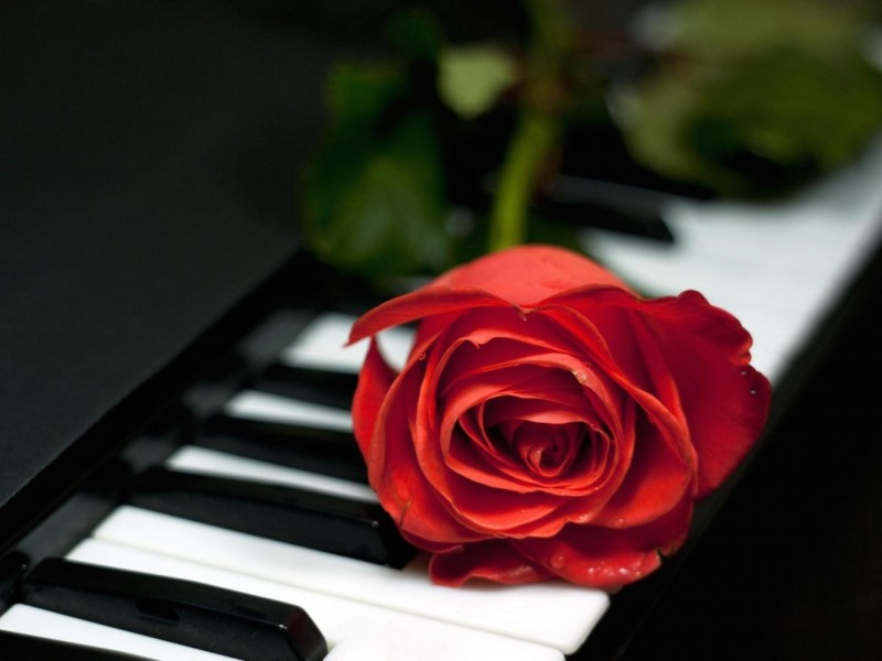 Romantic Single Red Rose Wallpaper