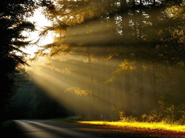 Sunlit Road Wallpaper