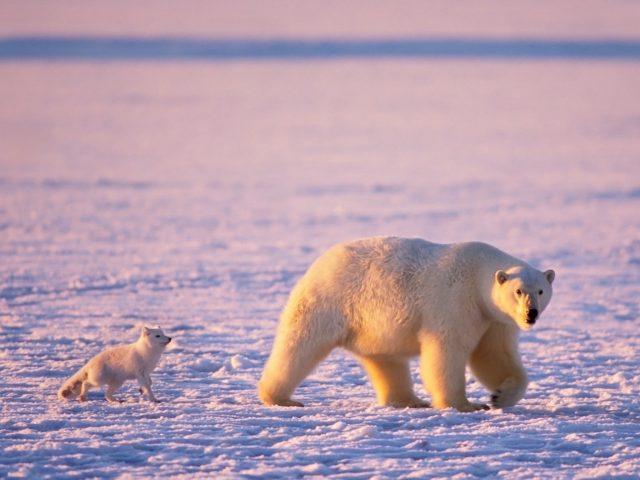 Arctic Friends Wallpaper