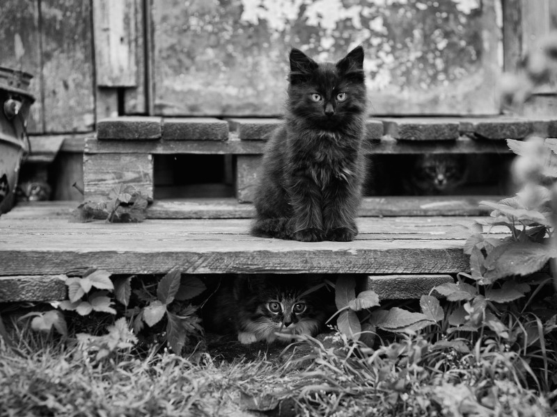 Kittens Hide-n-Seek Wallpaper