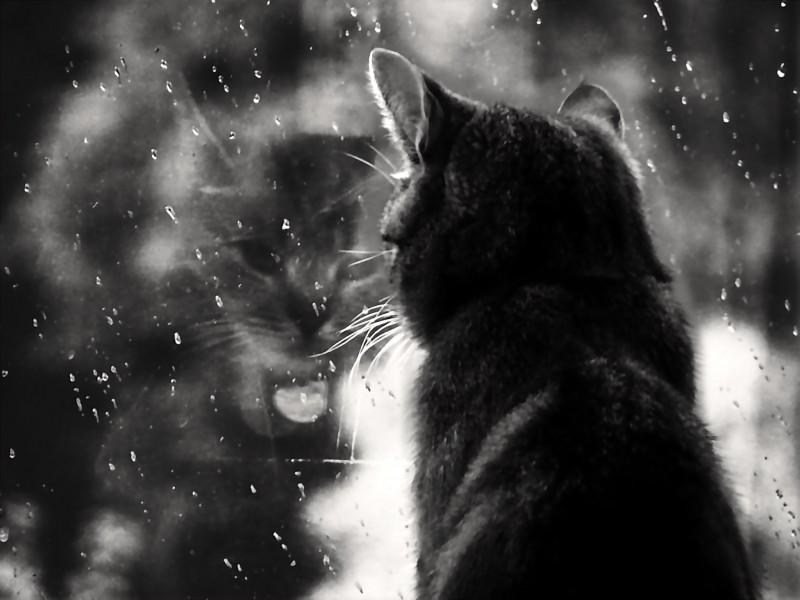 Rainy Mood Wallpaper