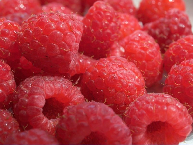 Ripe Raspberries Wallpaper