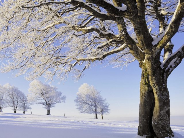 Snowy Black Forest-Germany Wallpaper