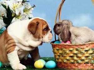 Easter Greeting Wallpaper