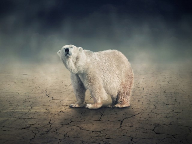 Solitary Polar Bear Wallpaper