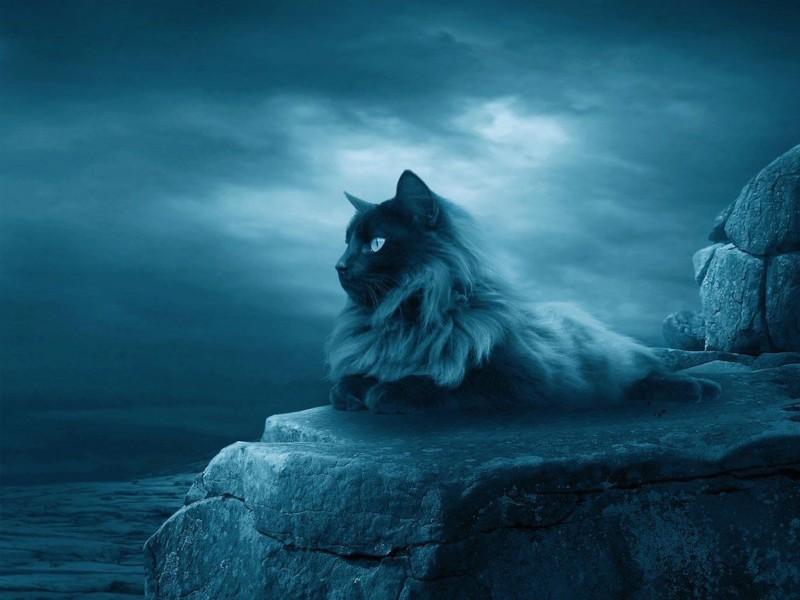 Calm Cat Wallpaper Free Hd Lunar Cat Download