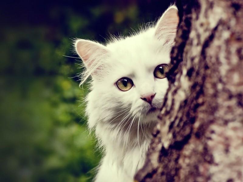 Cat Peeking Wallpaper