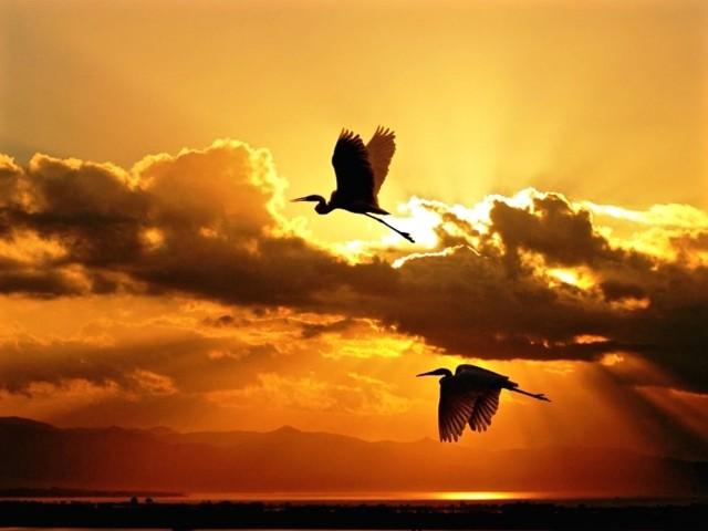 Herons Twilight Wallpaper