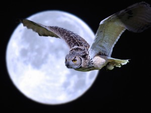 Owl-Super Moon Wallpaper