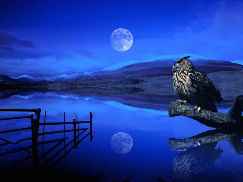 Wise Owl Wallpaper