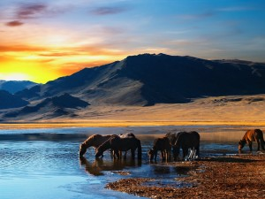 Thirsty Horses Wallpaper