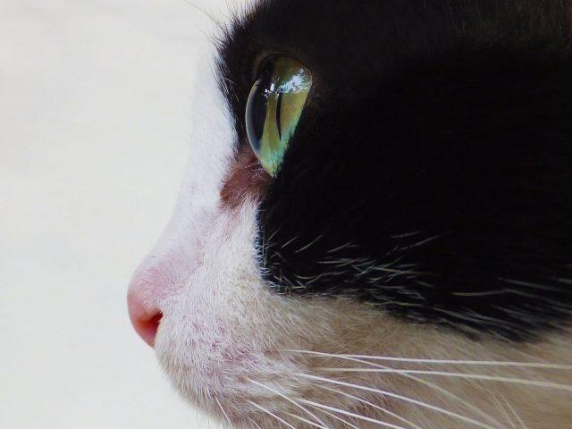 Cat Eye Profile Wallpaper