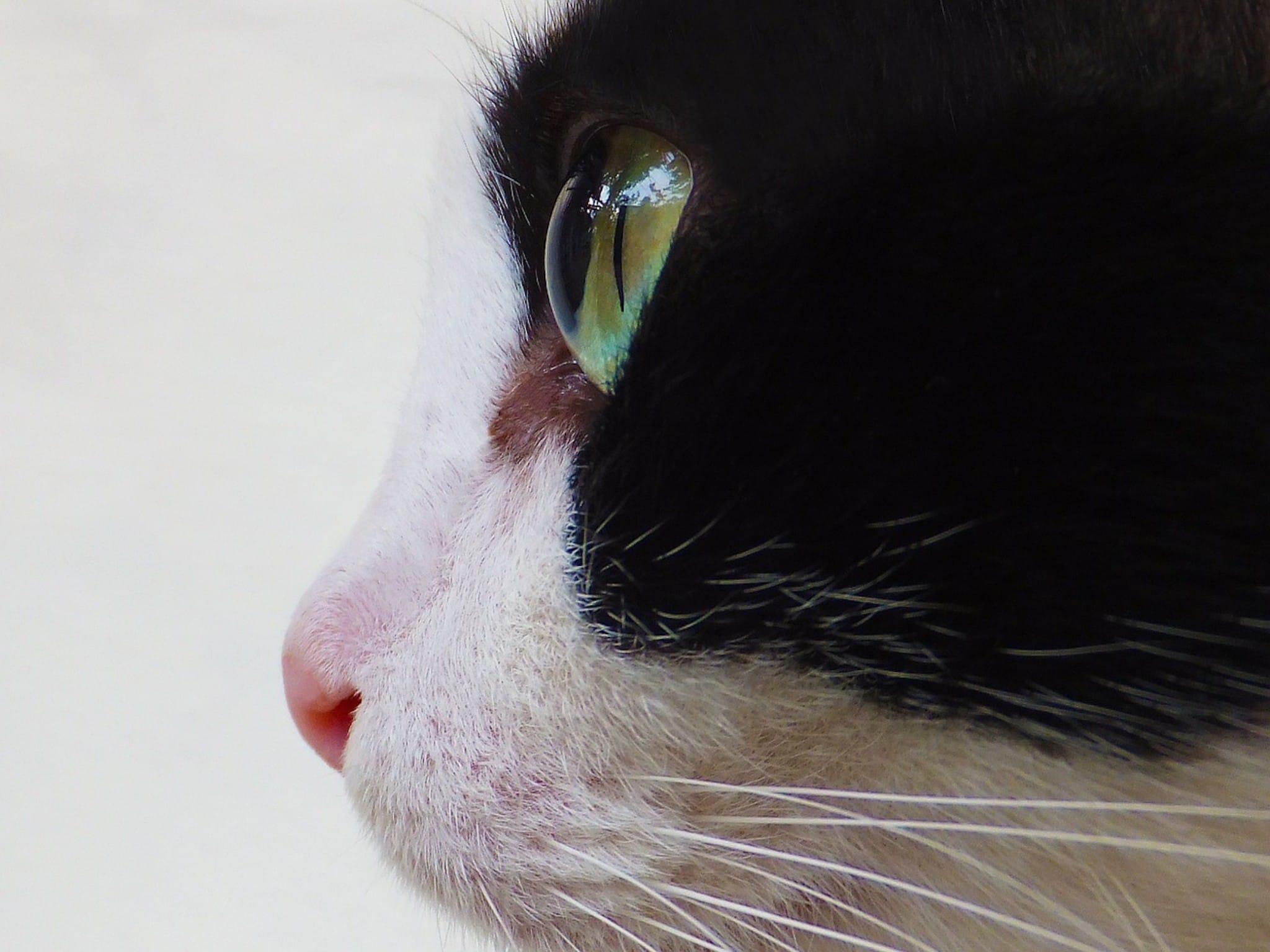 Cat Eye Profile Wallpaper   Free HD Cute Cats