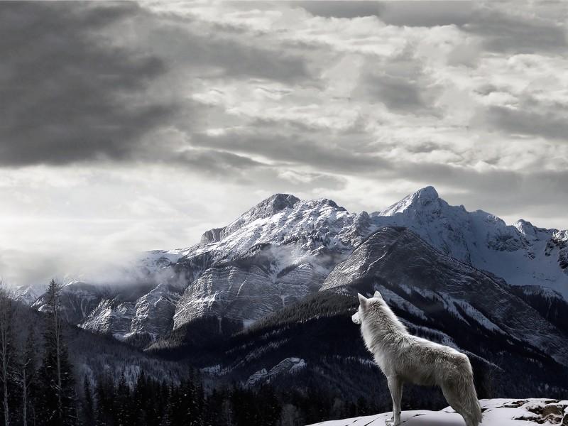 Wolf Mountain View Wallpaper