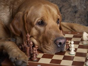 Puppy Checkmate Wallpaper