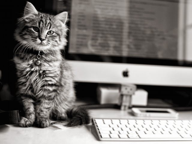 iMac Cat Wallpaper