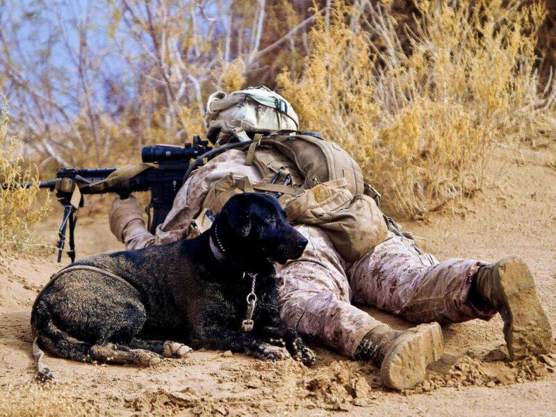 Veterans Best Friend Wallpaper
