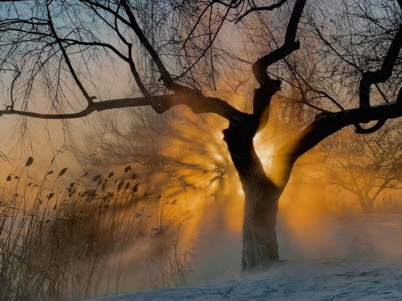 Misty Winter Morning Wallpaper