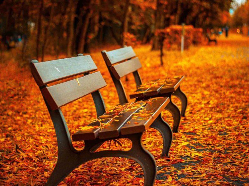 Autumn Park Benches Wallpaper
